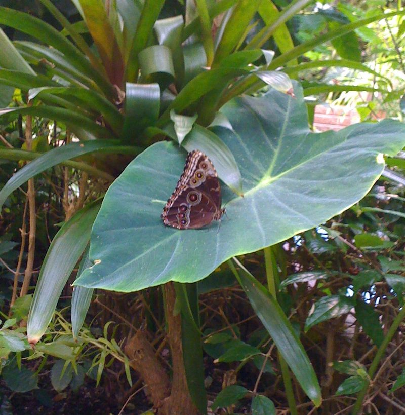 Butterfly house new
